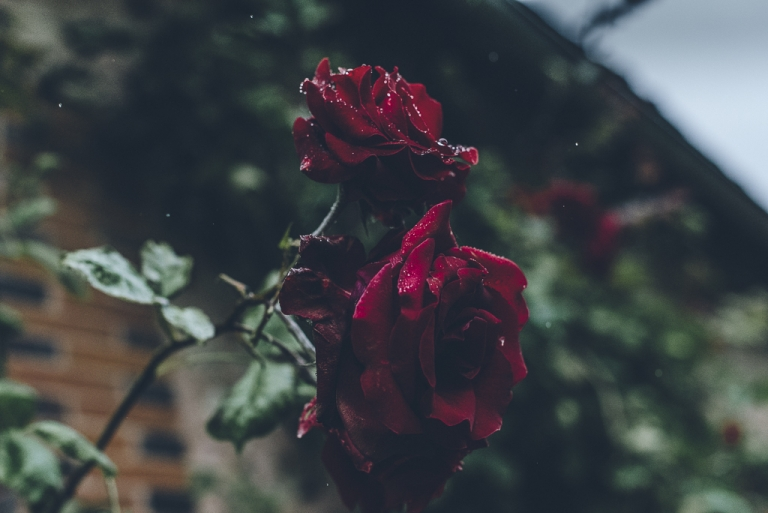 Mariage sous la pluie sylvainlelepvriertousdroitsreserves-3